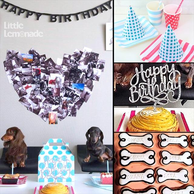 ワンちゃんのお誕生日会 : Dog's Birthday Party Report