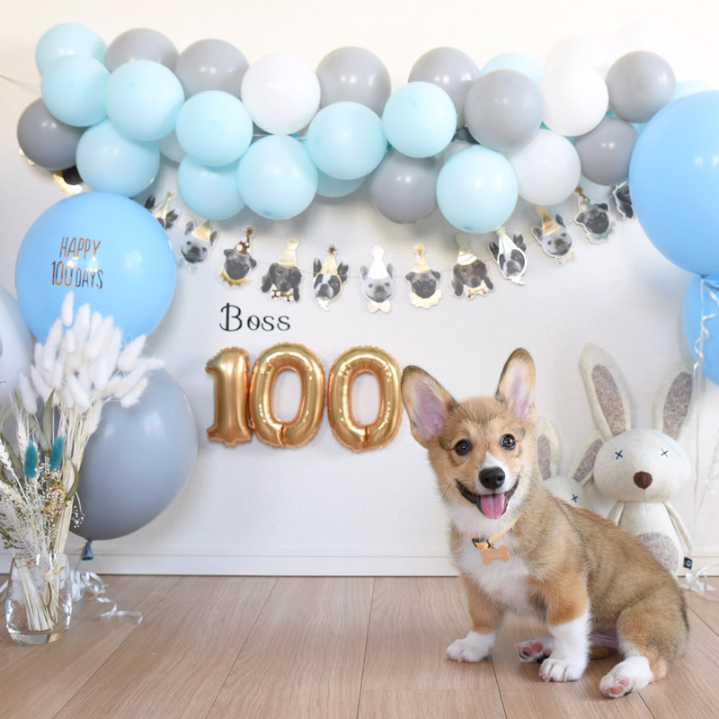 100 day celebration for dogs : わんちゃんの100日お祝い